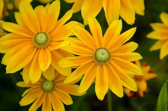Gele bloemen van Photography by Karim