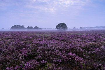 Blühende Heidelandschaft auf der Veluwe von Rick Kloekke
