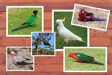 Collage van Australische papegaaien van Ines Porada