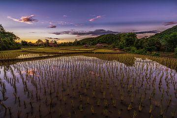 Rijstvelden Thailand van Mario Calma
