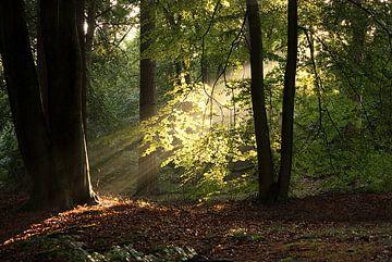 Zon door de bomen Hoge Veluwe von Erik de Bruin