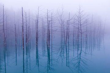 Mistige blauwe vijver, OSAMU ASAMI van 1x