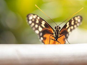 Mooie vlinder, gedetailleerd gefotografeerd. van Mariëtte Plat