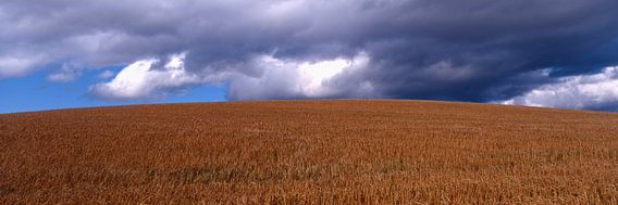 Wolken boven de tarwe