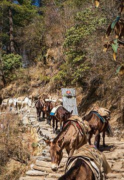 Sherpa en Paarden hebben het zwaar. van Ton Tolboom