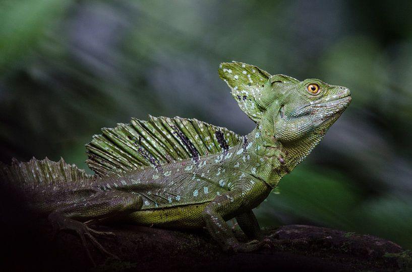 Basilisk hagedis / basilisk lizard van Elles Rijsdijk