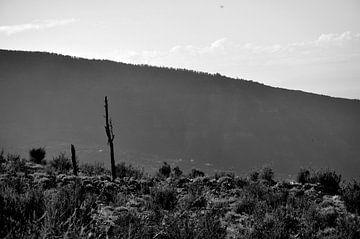 Der einsame Kaktus von Carlijn van Gerrevink