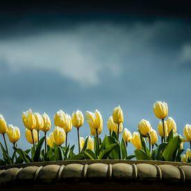 Tulpen op een mooie lucht van Freddy Hoevers