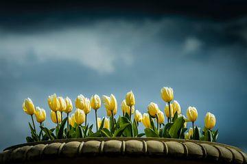 Tulpen auf einem schönen Himmel von Freddy Hoevers