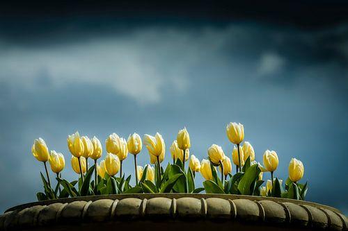 Tulipes sur un beau ciel