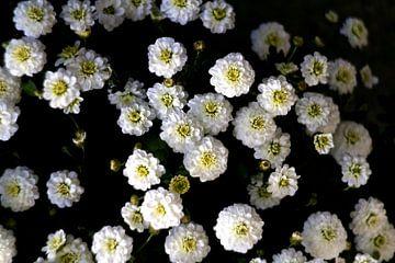 Herbstliche Blumen von Marianna Pobedimova