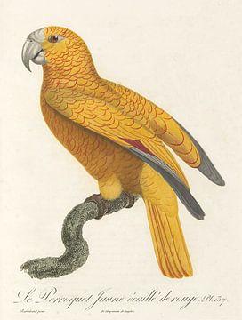 De Gele Papegaai met Rode Vlek, John Gould van Teylers Museum