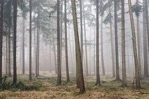 Verstopte boskabouters van Robert Paul Jansen