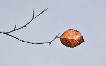 Herfst van Nienke Bot