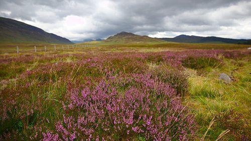 Schotse Hooglanden van