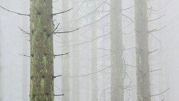 Dennenbos in de mist, Hoge Venen, België von Jeannette Kliebisch