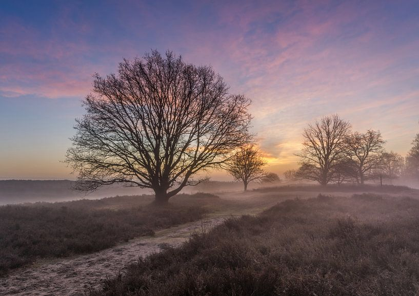 Misty sunrise Posbank van Mario Visser