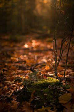Ochtend lichtval op boomstronk met mos in herfst bos van Mayra Pama-Luiten