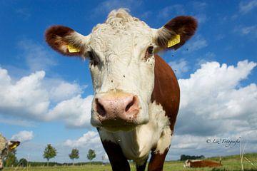 Bruin-witte koe van Elsa Datema