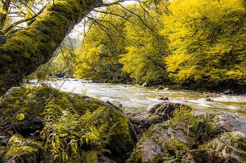 Herfstsfeer aan de rivier Emblève in de Ardennen