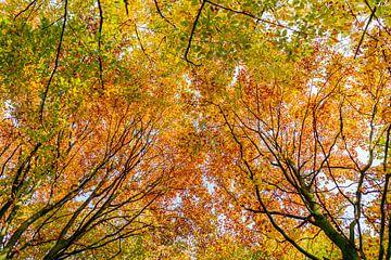 Herfst van Kaj Hendriks