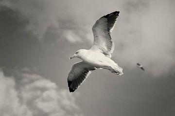 Vogelvlucht von Rene du Chatenier