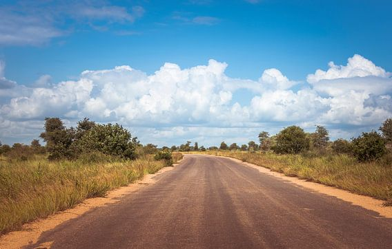 road in the kruger national park in south africa