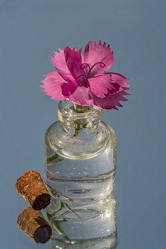 Roze Anjerbloem in een klein glazen flesje met kurk van Dafne Vos