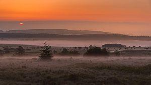 Brouillard au sol sur les Hautes Fagnes. sur Koos SOHNS   (KoSoZu-Photography)
