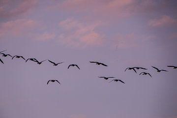 Fly Away van Anna Groenia