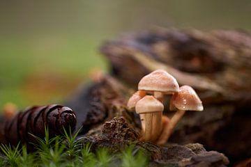 Herfst tafereel met klein groepje paddenstoelen van Cor de Hamer