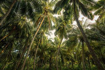 Enkele palmboompjes van Joris Pannemans - Loris Photography