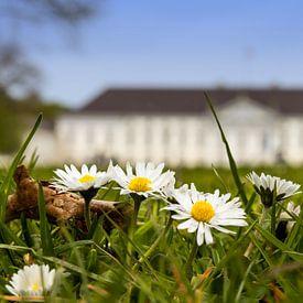 Gänseblümchen vor dem Schloss Bellevue von Frank Herrmann