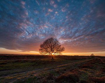 Untergang der Sonne von Marcel Hof