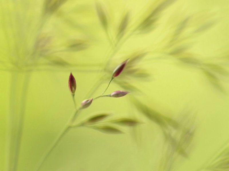 Schaduwballet, a ballet of grass