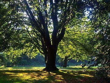 Ochtend in het park van Edgar Schermaul