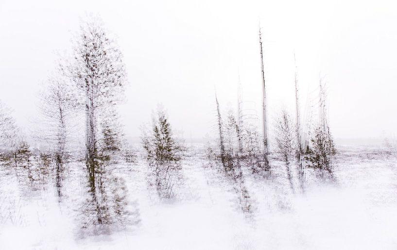 Taiga in Belarus van Claudia van Zanten