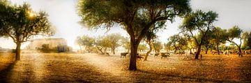 Champ d'oliviers avec un troupeau de moutons à Majorque. sur Voss Fine Art Fotografie