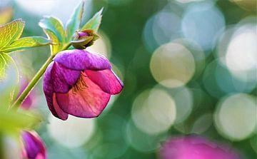 Flower with bokeh von Malinka Patelka