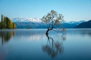 That wanaka tree | Lake Tekapo von Lorenzo Visser