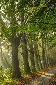 Magische Bäume von Dirk van Egmond