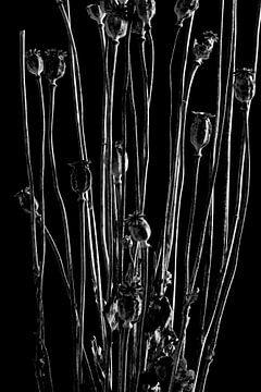 Nature Morte - Mohn (schwarz und weiß) von Remke Spijkers