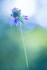 Zoekend naar het licht (bloem)