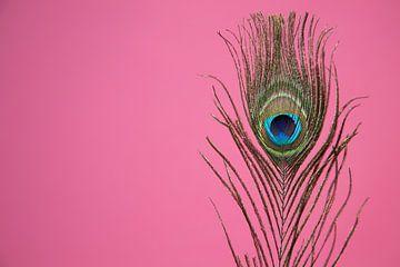 Pfauenfeder auf rosa Hintergrund von Tot Kijk Fotografie: natuur aan de muur