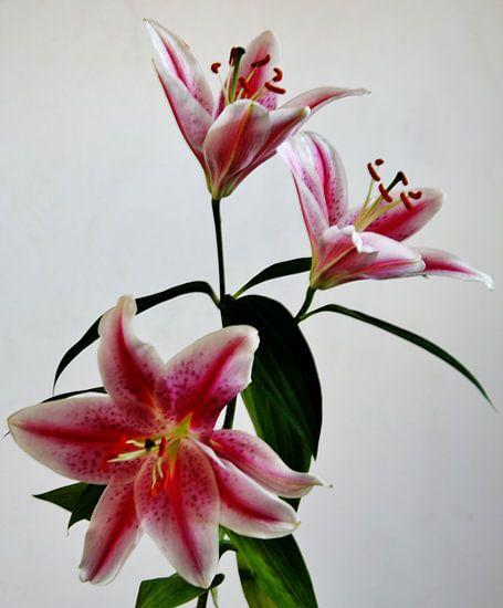 Bloemen Serie Rood. van Hans Jansen