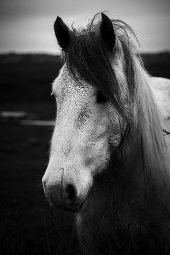 White horse portrait, Schiermonnikoog van Luis Fernando Valdés Villarreal Boullosa
