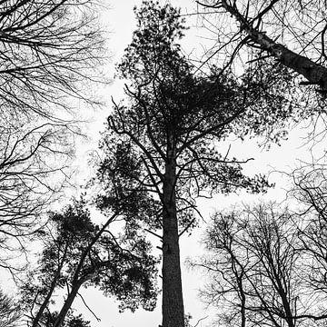 Zwart wit beeld van bomen von Tess Smethurst-Oostvogel