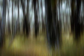 dans les bois sur URS.INHO