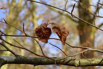 Zwei Herbstblätter an einem Baum von Nicolette Vermeulen