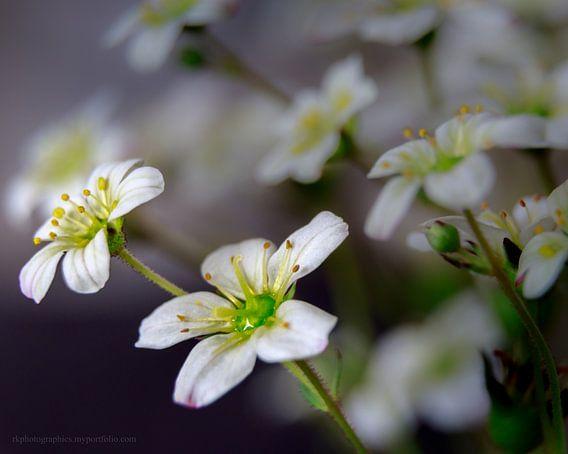 Bloemenmeer van Ralf Köhnke